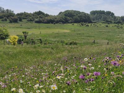 Leve de biodiversiteit